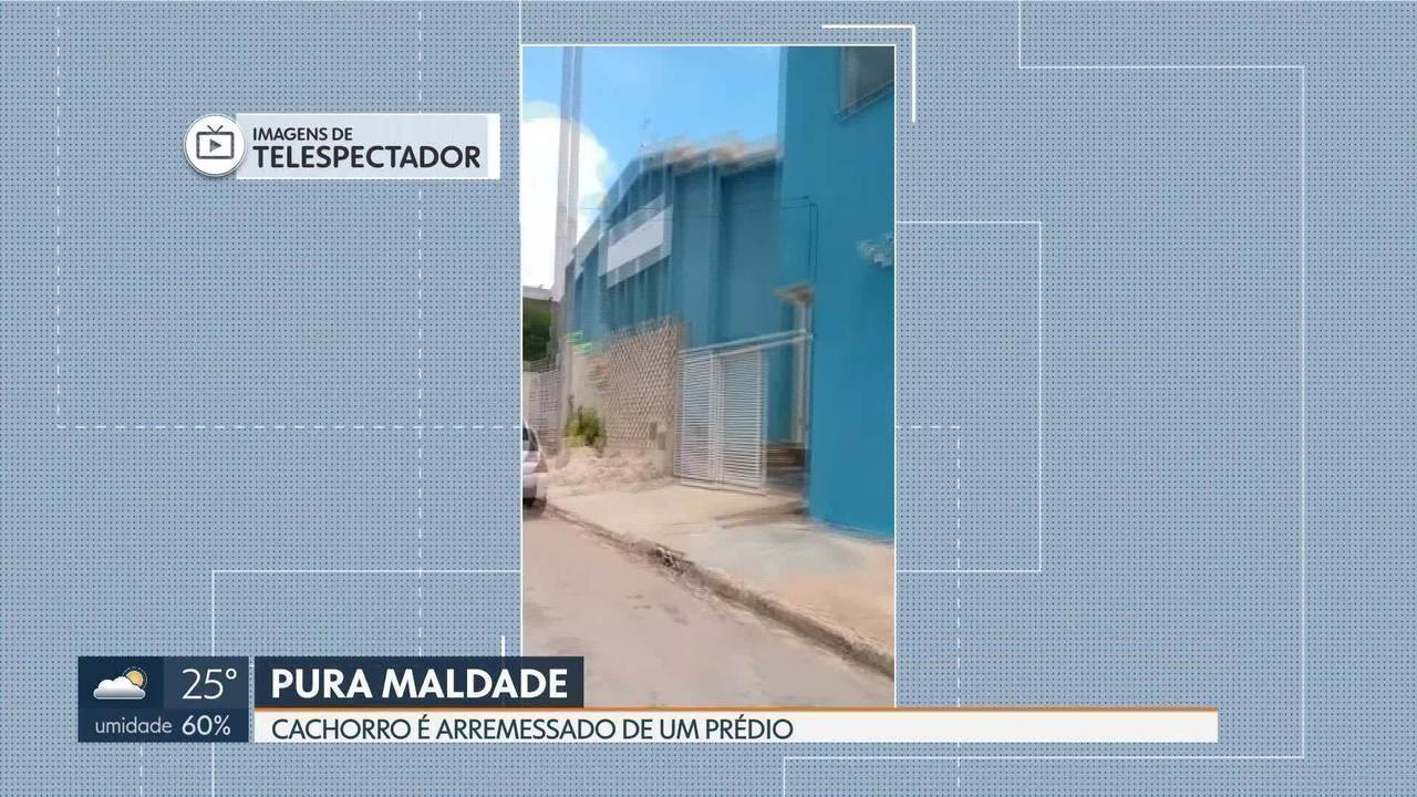 Homem arremessa cachorro de um prédio de 12 metros de altura