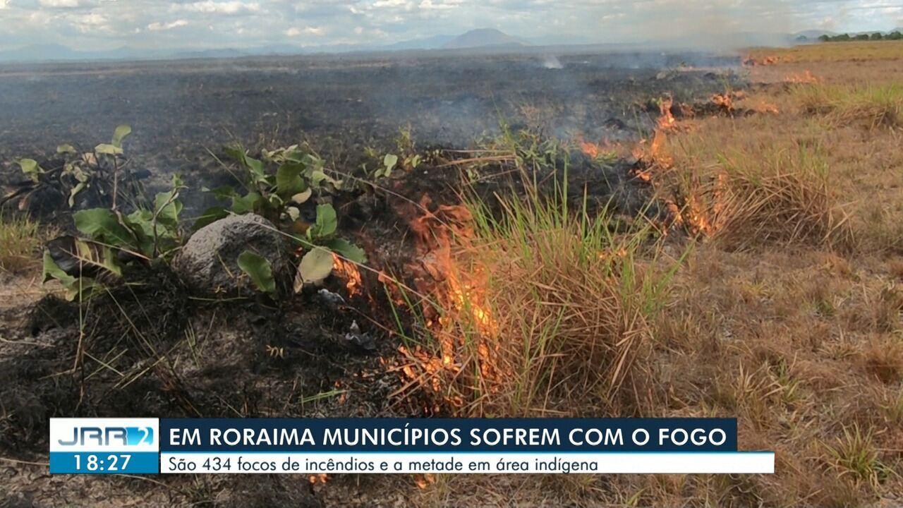 Animais são mortos em queimada no Sul de Roraima