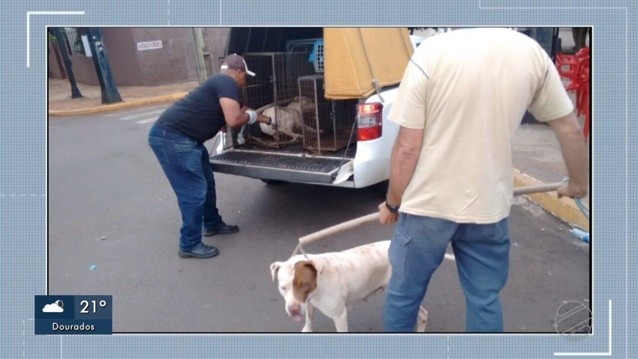 Cachorros são recolhidos após ataques em Campo Grande