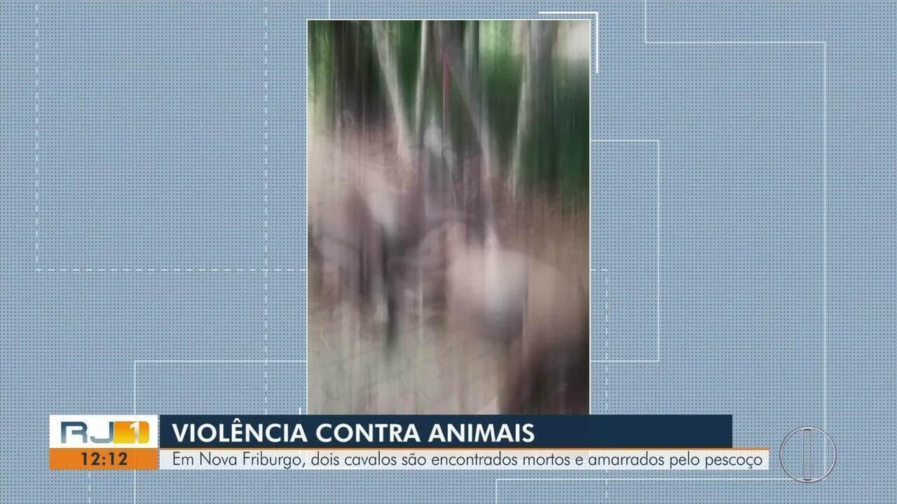 Em Nova Fribugo, RJ, dois cavalos são encontrados mortos e amarrados pelo pescoço