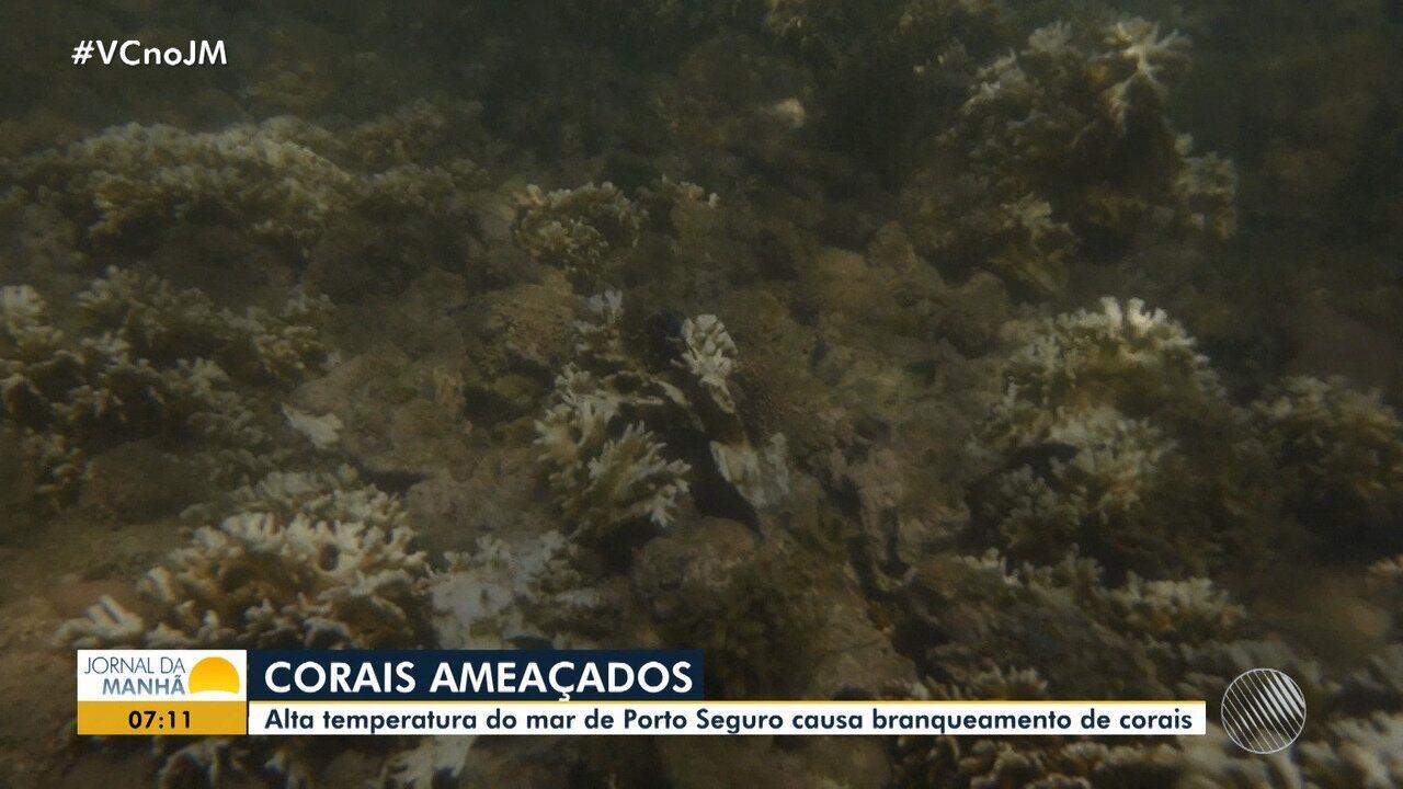 Temperatura do mar causa branqueamento de corais em Porto Seguro