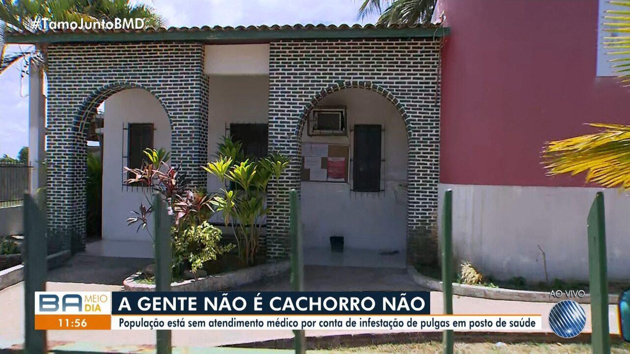 Infestação de pulgas interrompe atendimento em posto de saúde de Lauro de Freitas