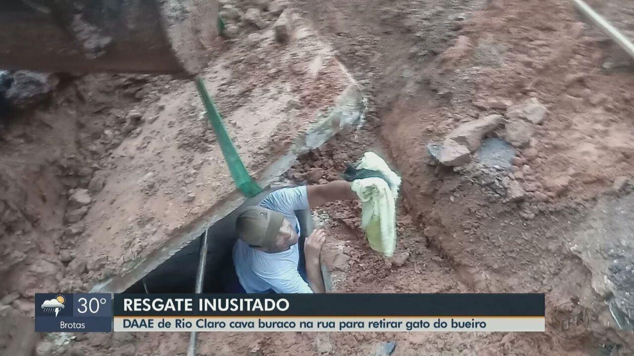 Equipe do Daae de Rio Claro cava buraco para resgatar filhote de gato preso em bueiro