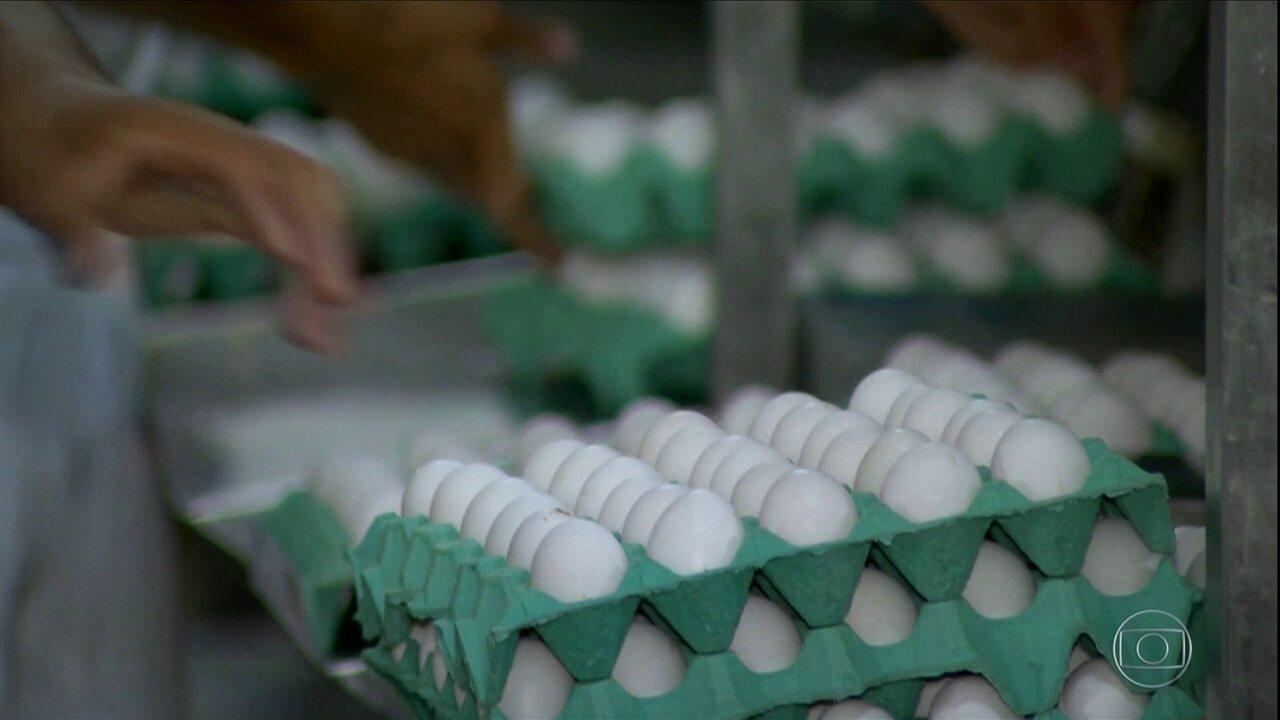 Com a chegada da Quaresma, produtores de ovos de Minas Gerais esperam aumento nos preços