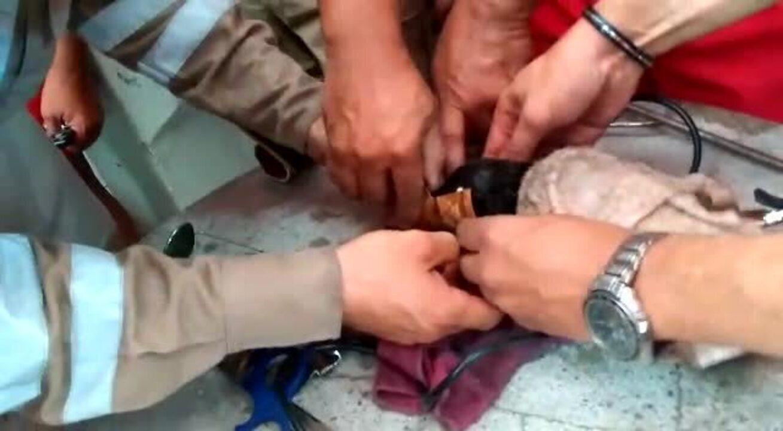 Bombeiros salvam cachorro que estava com cabeça presa em cano no Recife