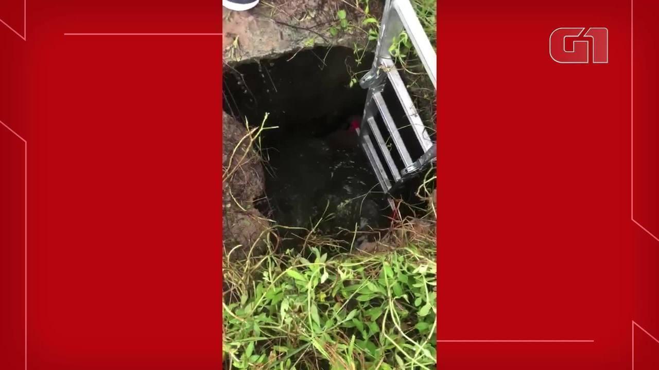 Cão é resgatado por um grupo de amigos em Fortaleza