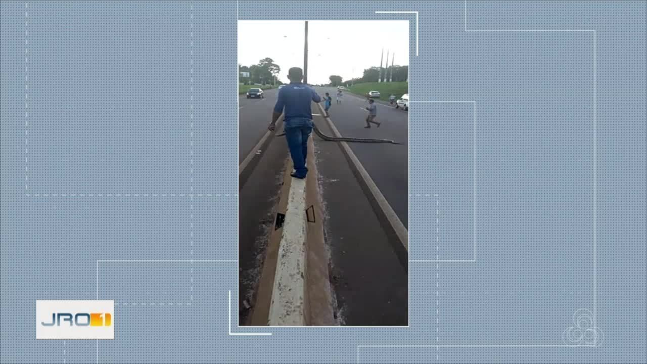 Cobra passeia por rua de Porto Velho