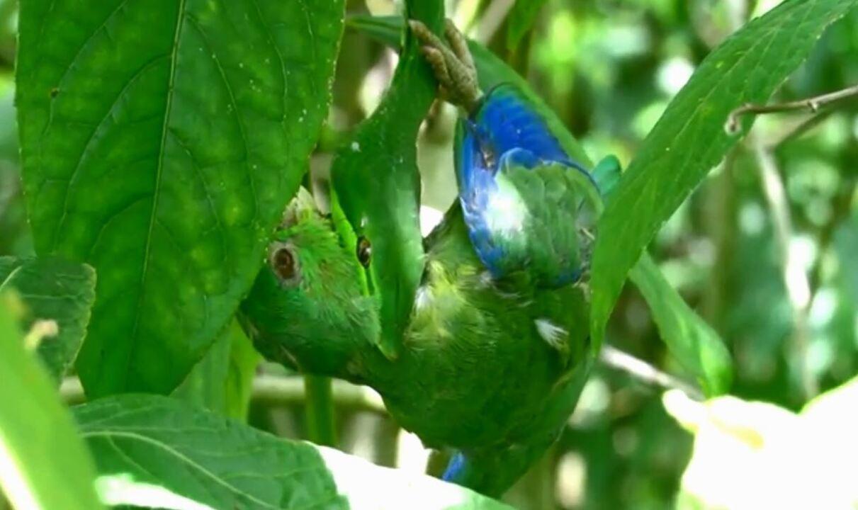 Cobra-bicuda-verde predando é filmada de perto por observador