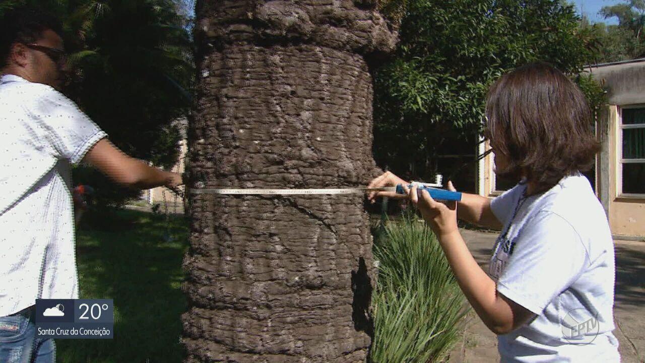 UFSCar faz mapeamento de árvores para acompanhar crescimento e prevenir acidentes