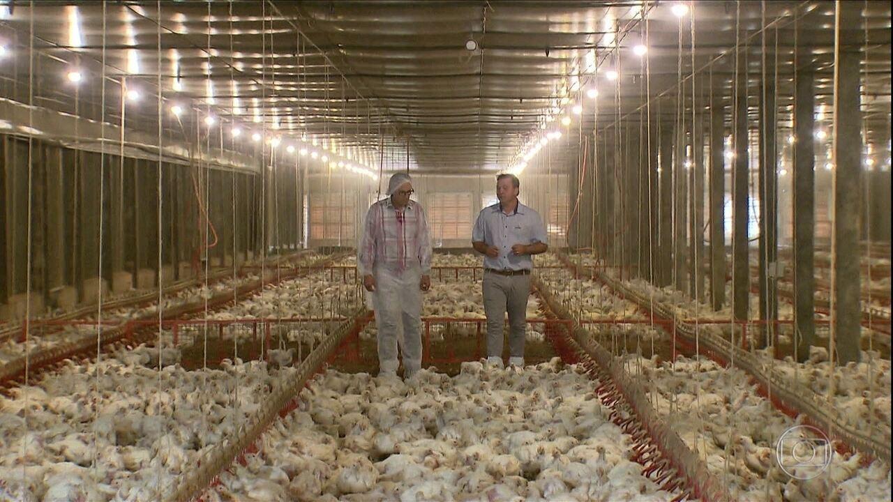 'Frango 4.0': conheça o condomínio de granjas que produz 7 milhões de aves por ano - 2/2