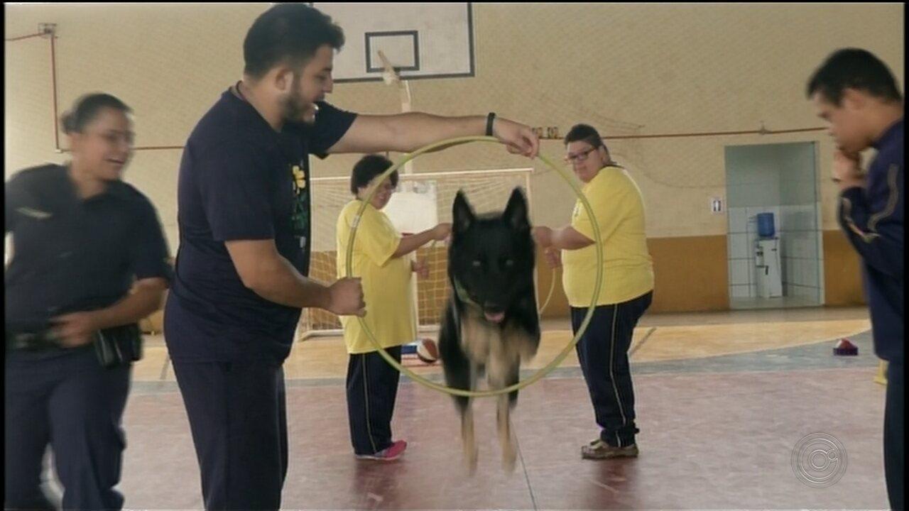 Projeto cria terapia para crianças especiais por meio de interação com cães em Itararé