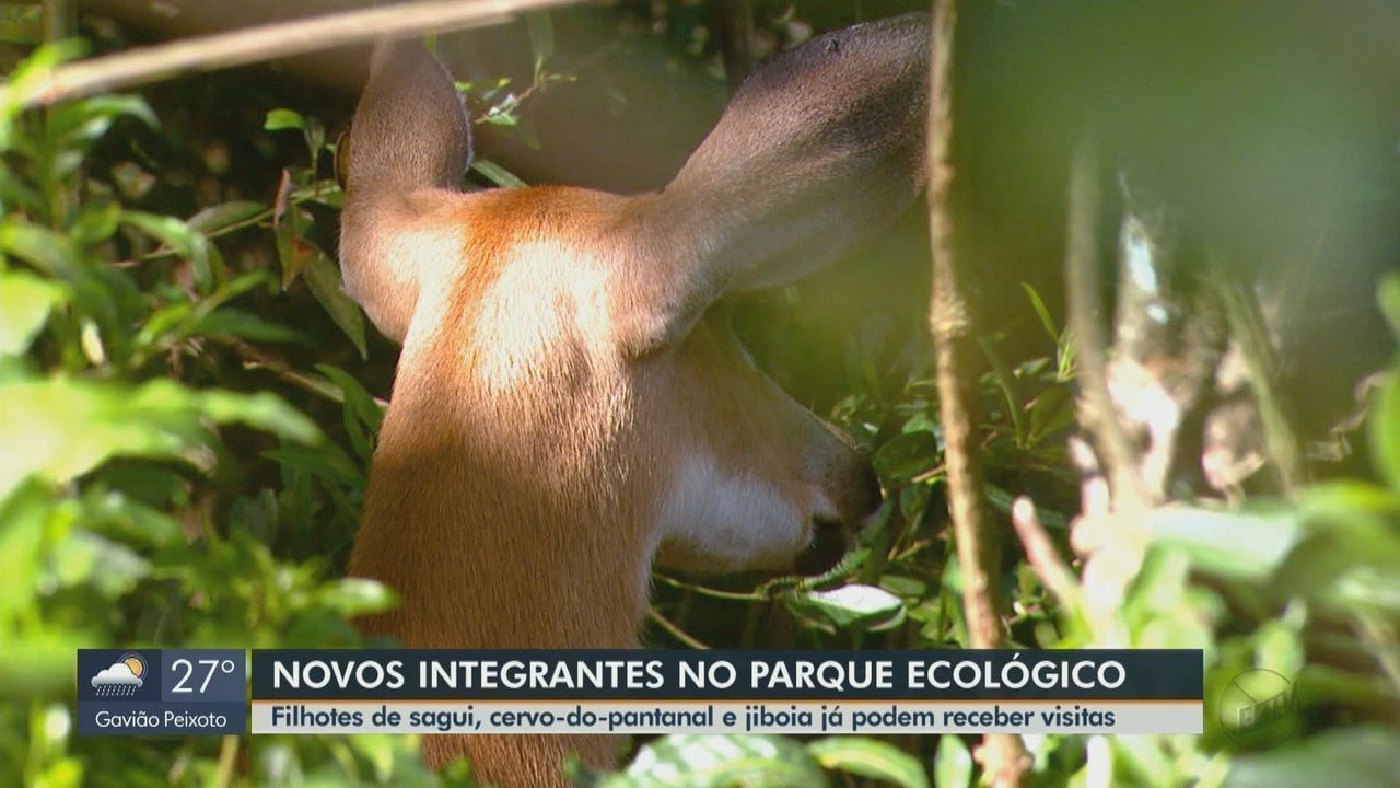 Parque de São Carlos tem novos integrantes no grupo de animais silvestres para visitação
