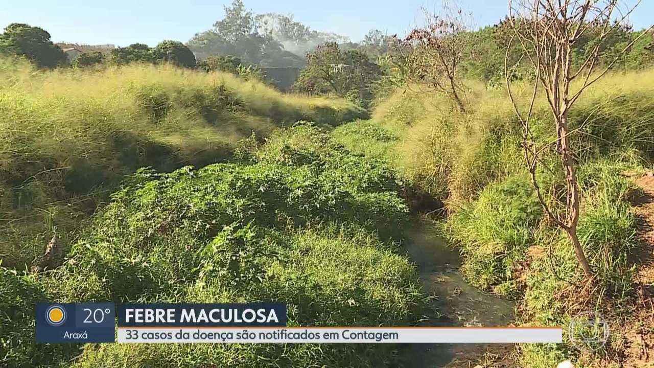 Casos notificados de febre maculosa chegam a 33 na Região Metropolitana de BH