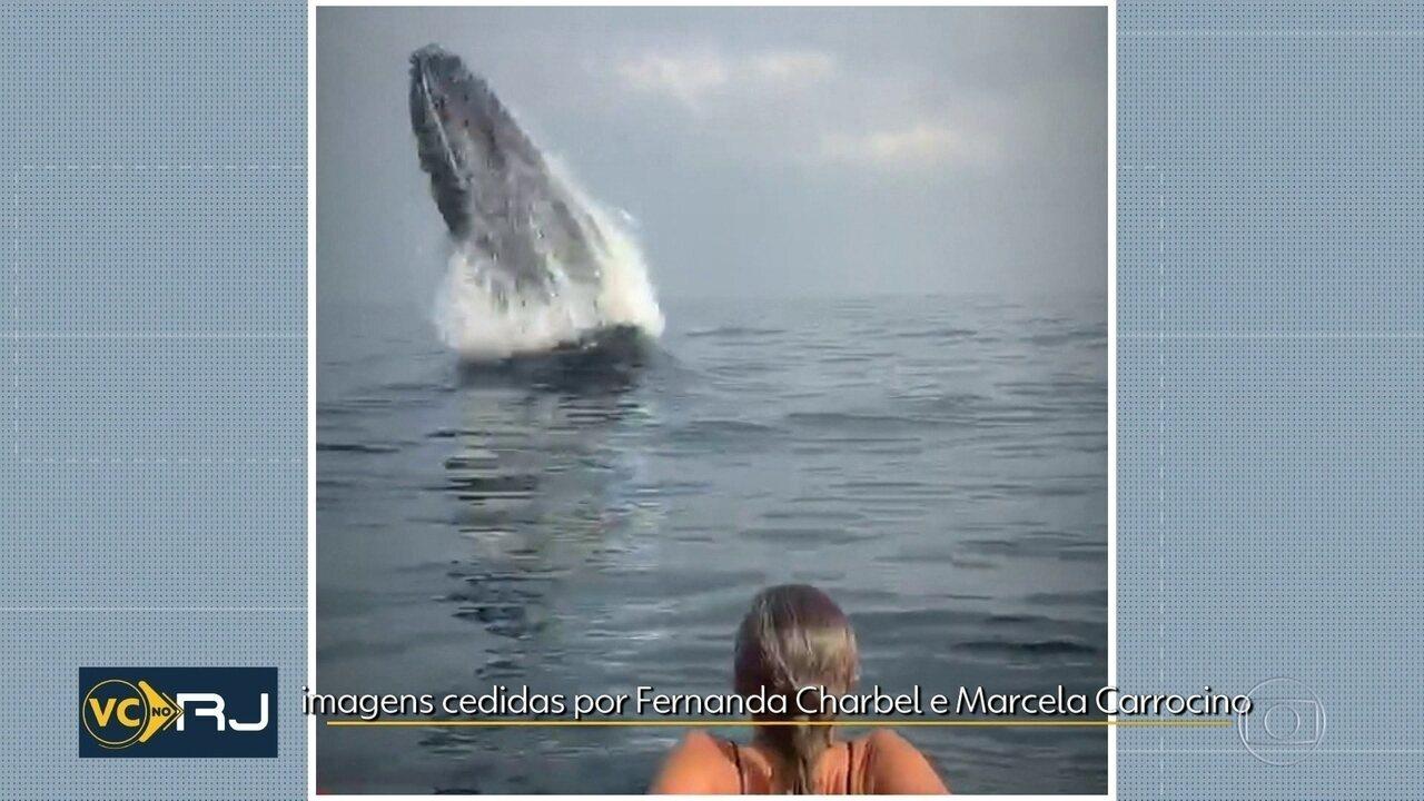 Baleia jubarte dá show na Barrinha