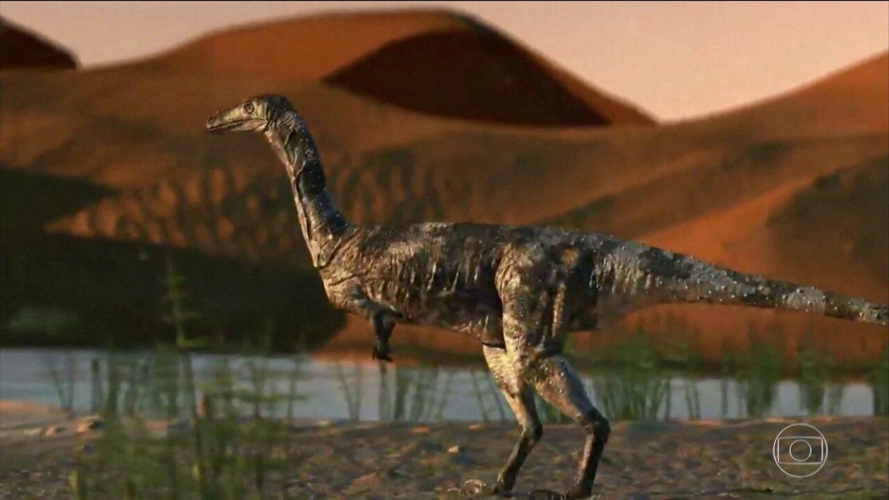 Cientistas brasileiros descobrem uma nova espécie de dinossauro