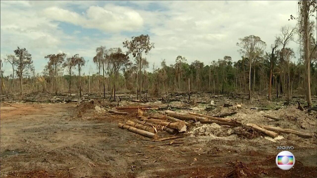 Desmatamento na Amazônia aumenta em junho