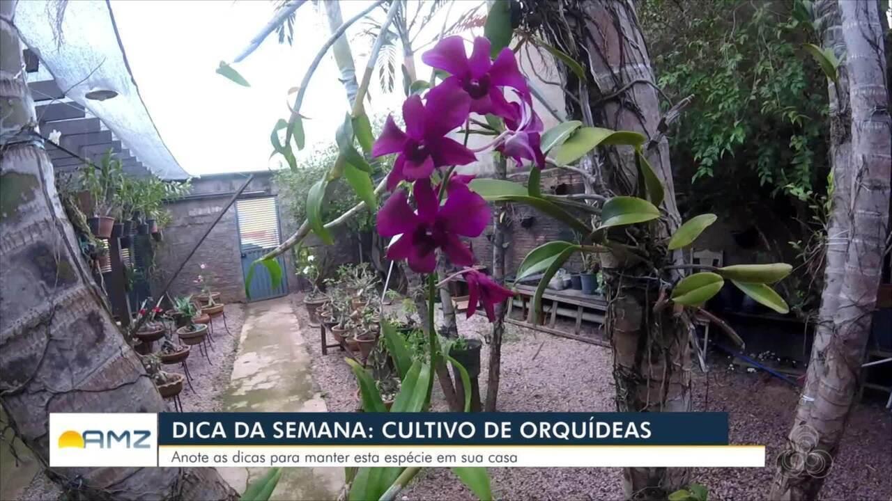 No Quadro Conexão Verde, o Bom Dia Amazônia RO desta sexta, 5 é sobre as orquídeas