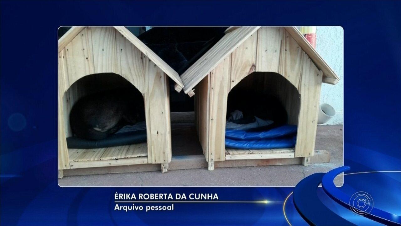 Empresária cria 'cãodomínio' para abrigar cães de rua em Buri