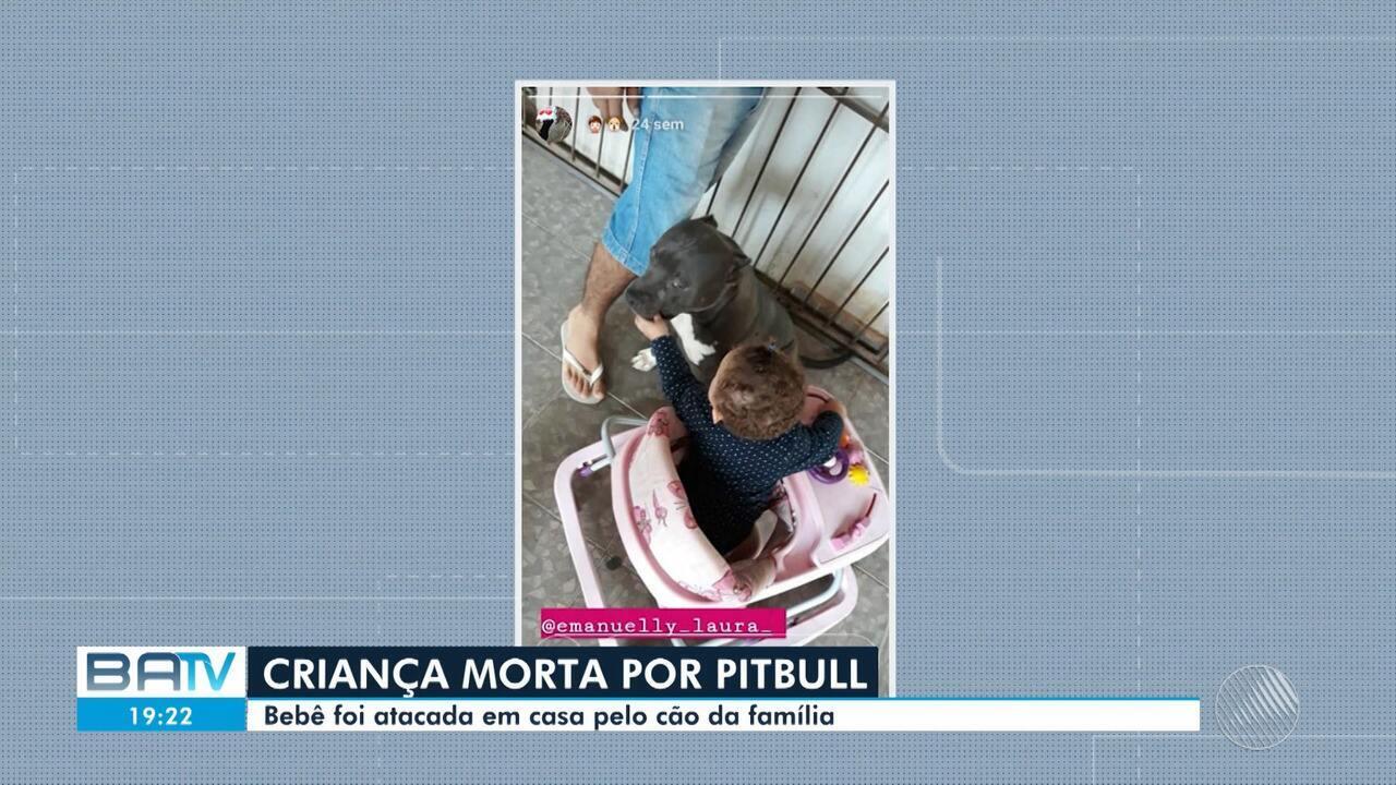 Criança morre depois de ser atacada por pitbull, em cidade do norte do estado