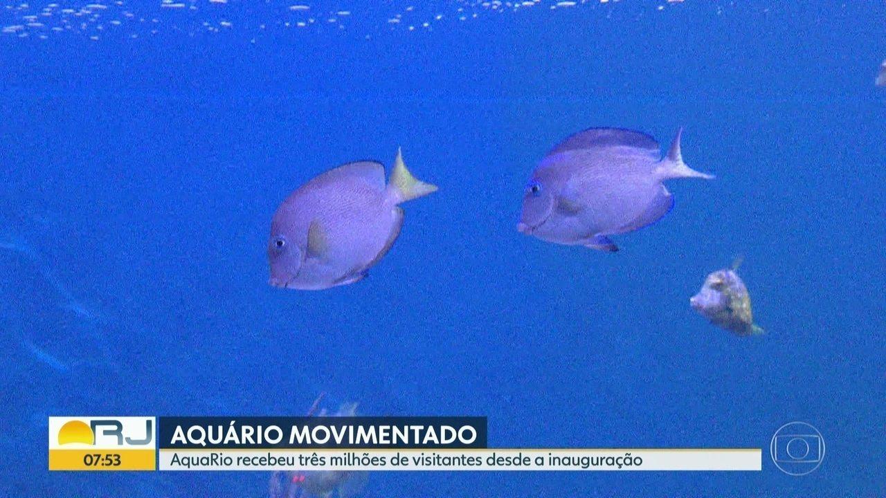 AquaRio chega a marca de três milhões de visitantes