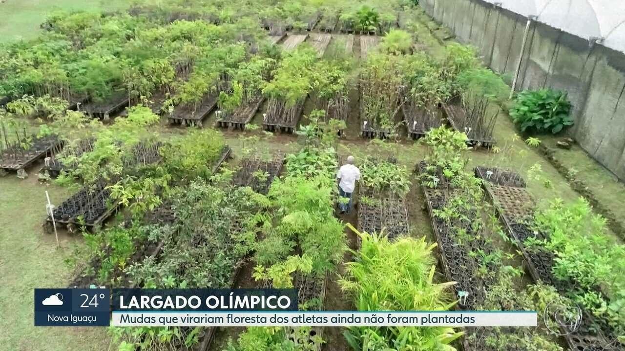 Mudas que virariam floresta dos atletas da Rio 2016 ainda não foram plantadas