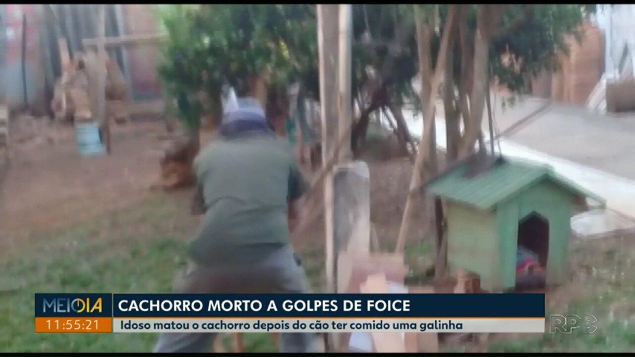 Idoso é preso suspeito de matar cachorro com golpes de foice em Ponta Grossa