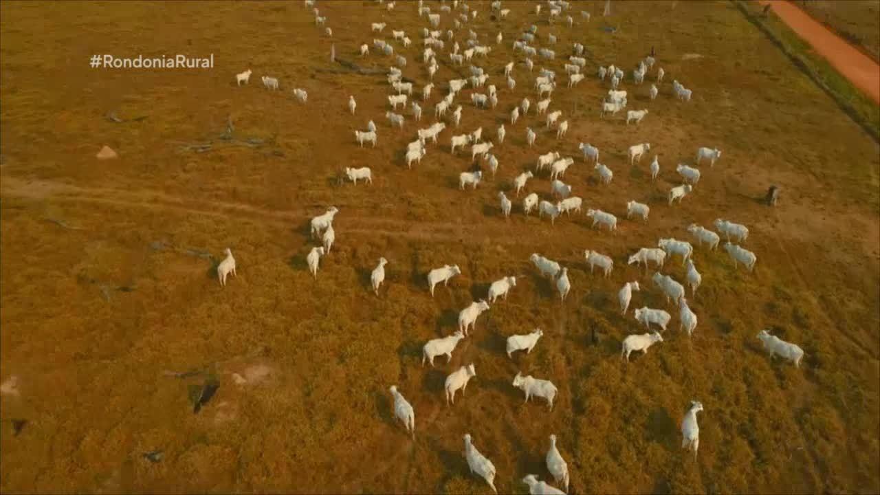Pecuária de corte cada vez mais sustentável na Amazônia