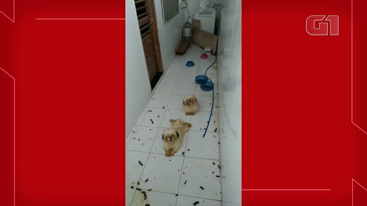 Cães são abandonados em apartamento sem comida e água no Ceará