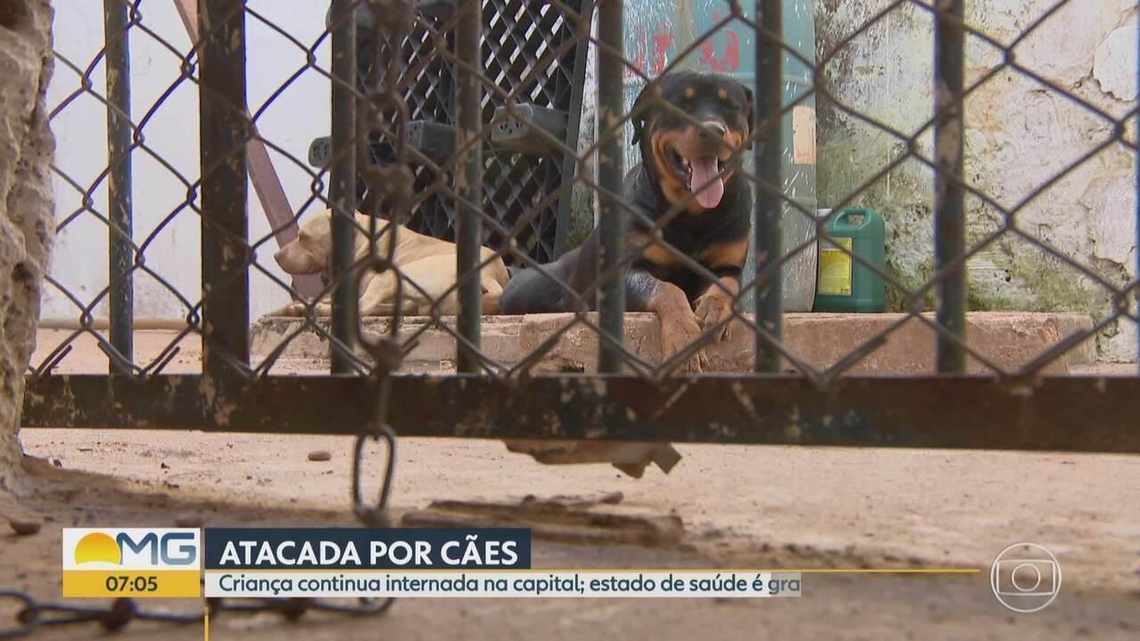 Menina de 2 anos atacada por cães segue internada em estado grave em Belo Horizonte