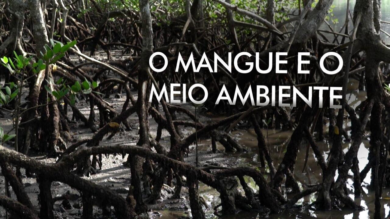 Extra: O mangue e o meio ambiente
