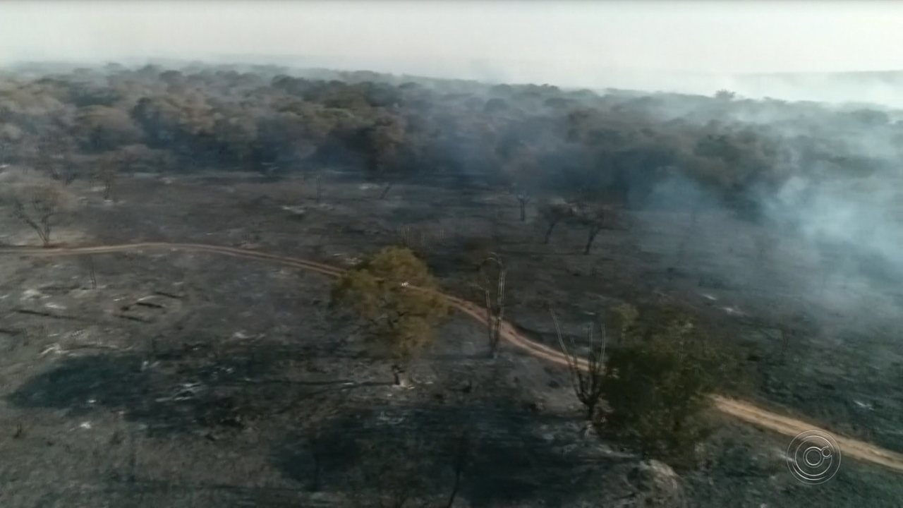 Incêndio de grandes proporções destrói área de cerrado do Jardim Botânico de Bauru
