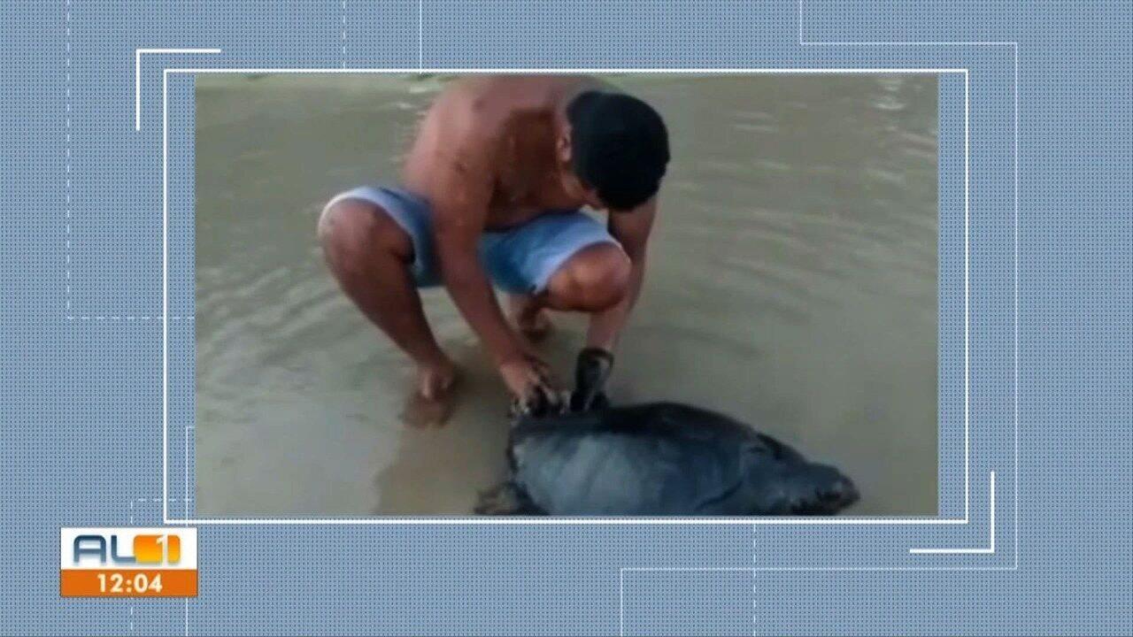 Vídeo do projeto Praia Limpa mostra tartaruga coberta por óleo no Pontal de Coruripe