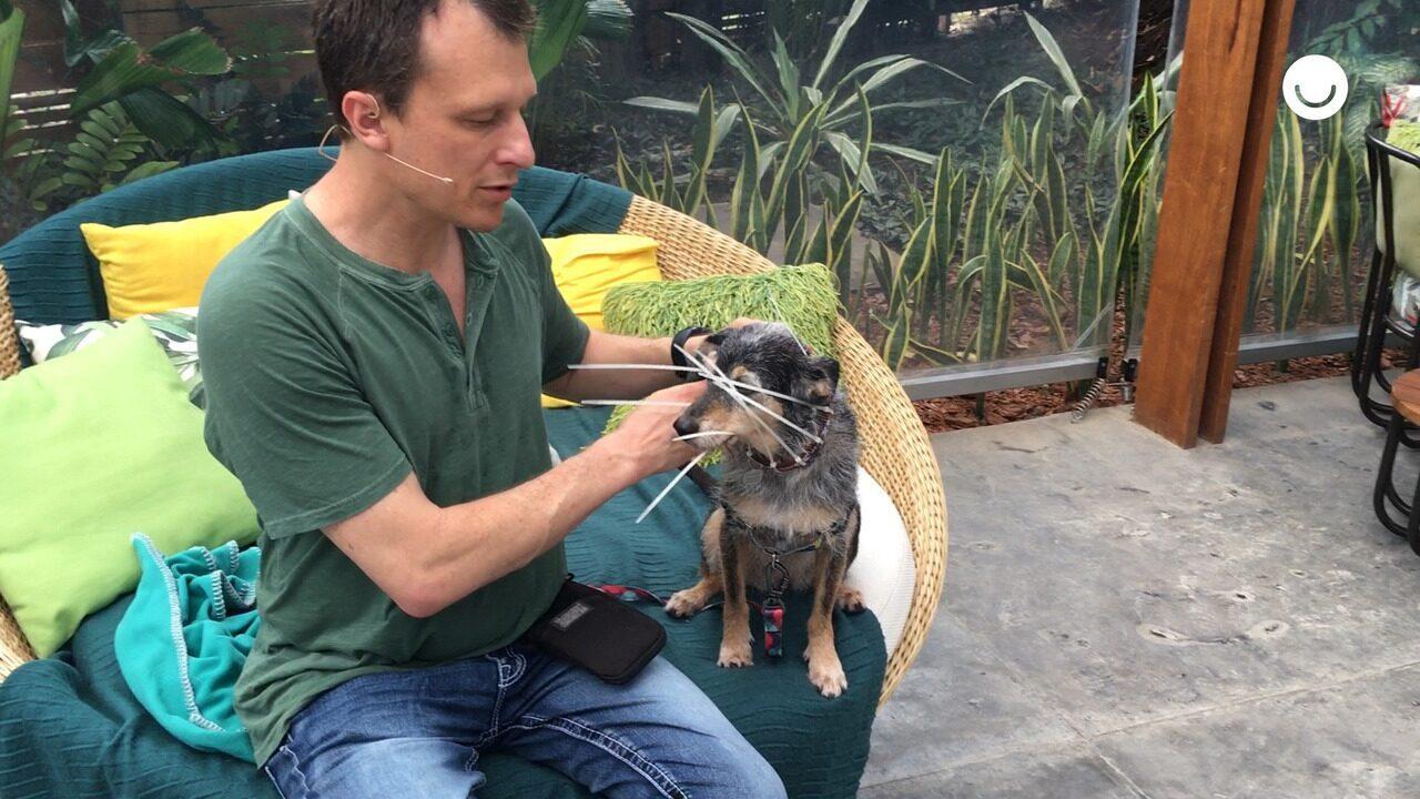 O especialista apresenta o para-choque para cachorros idosos