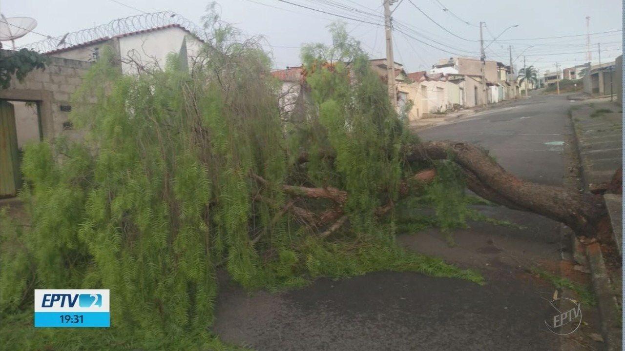 Vendaval derruba árvores e deixa bairros sem energia elétrica em Varginha