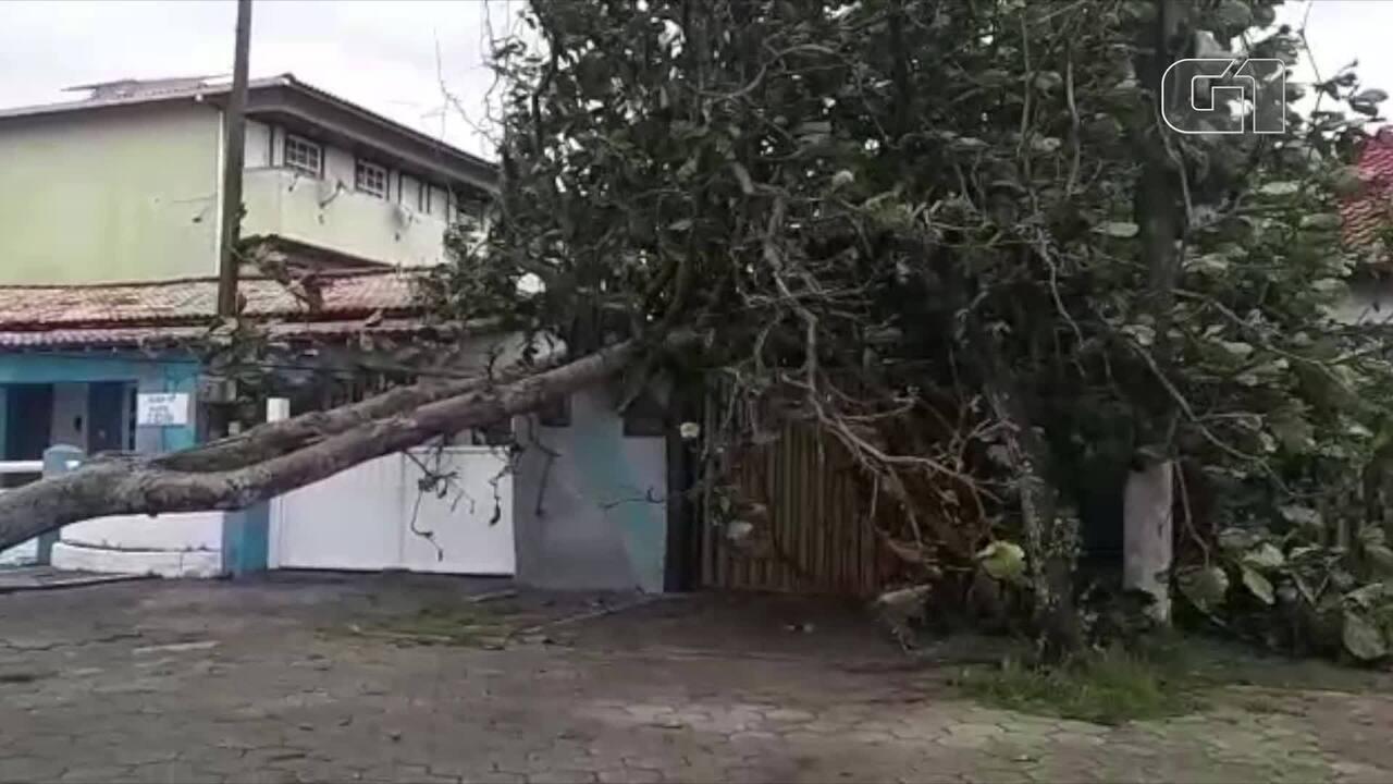 Árvore cai em cima de muro de casa em Casimiro de Abreu, no RJ