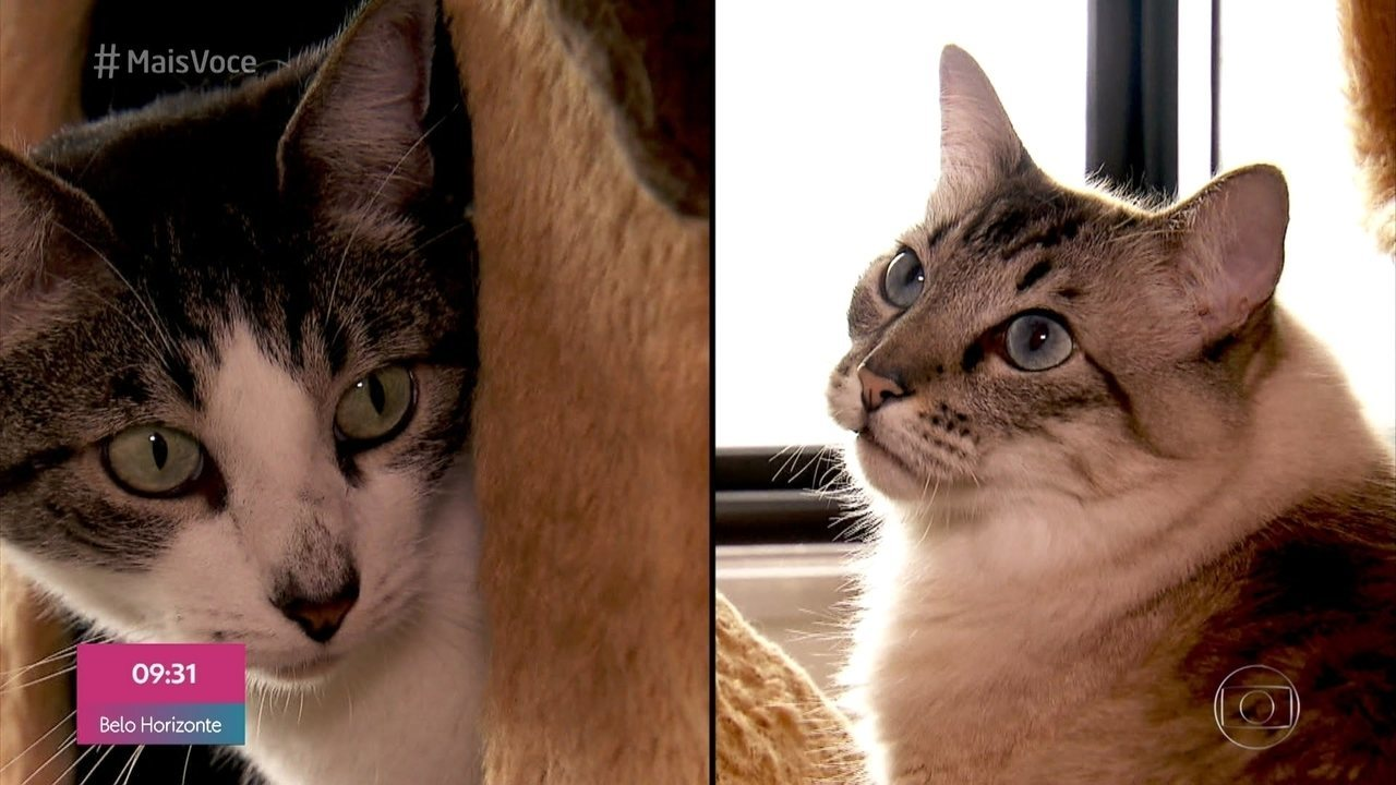 Personal Pet também ajuda quem tem gatos com problemas de relacionamento