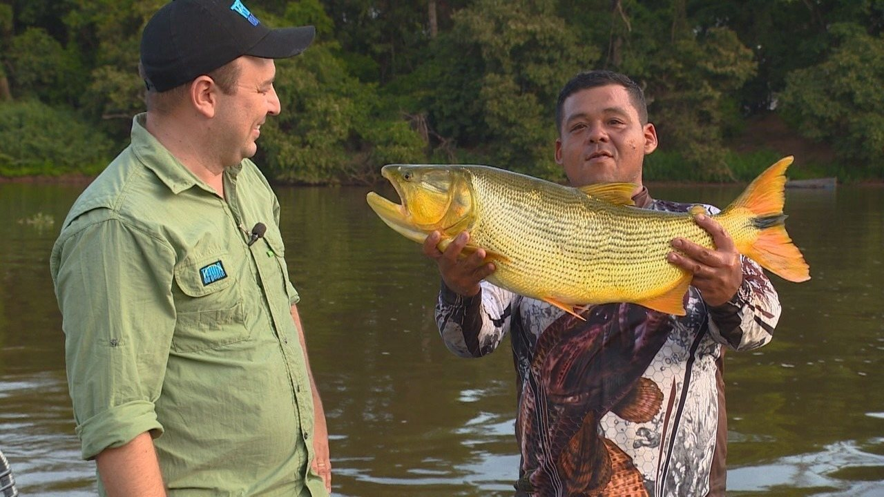 Dourado no rio Pardo