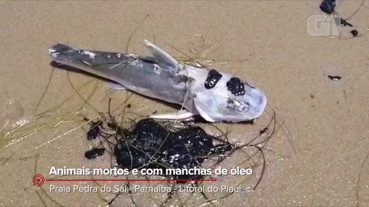 Animais mortos e com manchas de óleo são encontrados na Praia Pedra do Sal