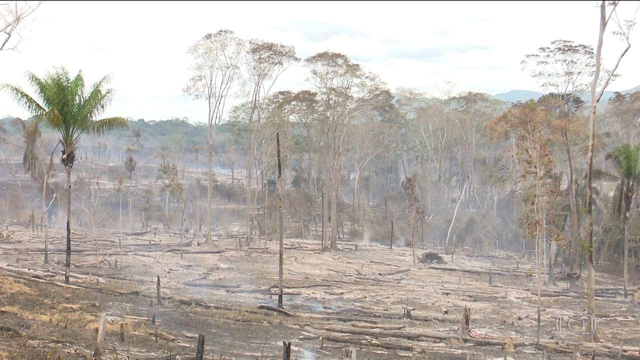 Desmatamento na Amazônia cresce quase 30% e é o maior desde 2008, diz Inpe