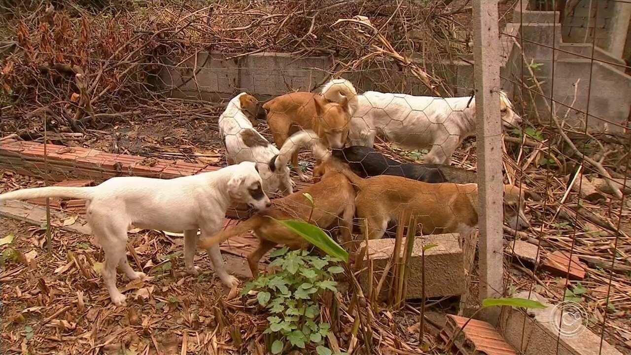 Animais deixados em casa de idosos são resgatados em Salto de Pirapora