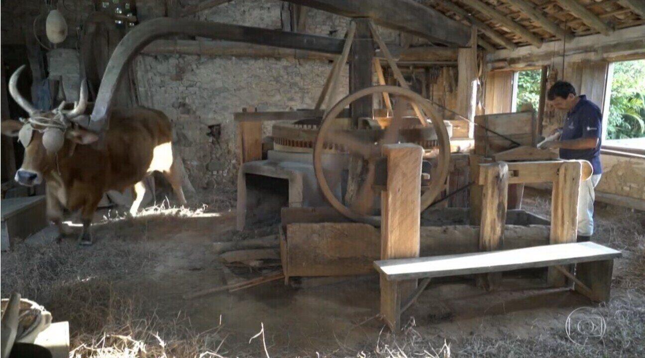 Engenhos preservam a tradição da farinha de mandioca catarinense