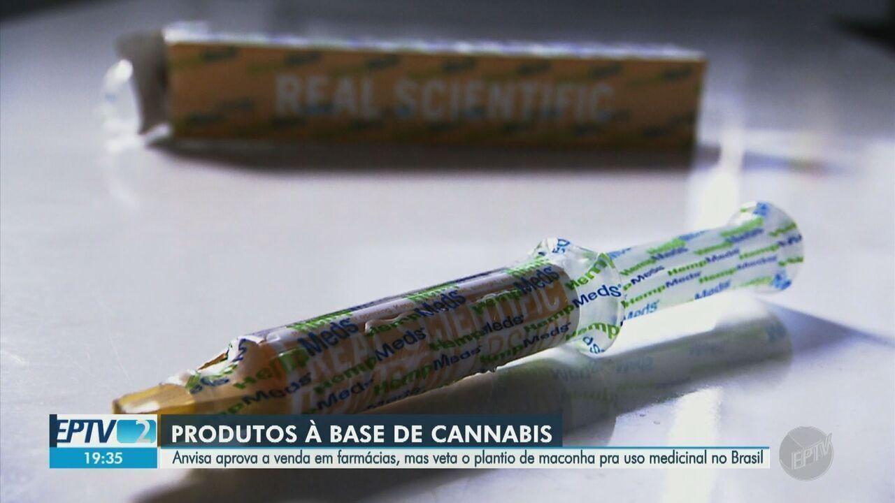 Anvisa libera venda de produtos à base de cannabis, mas rejeita cultivo