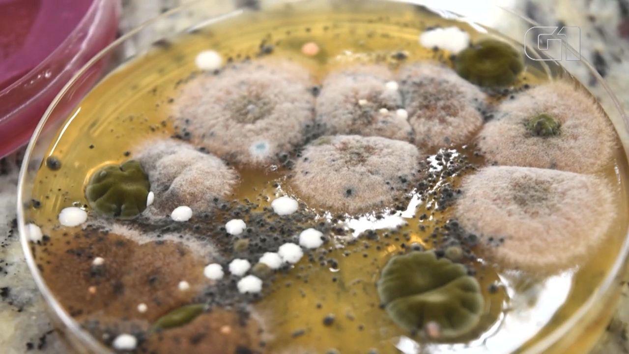 Pesquisa de Campinas analisa contaminação de 7 itens de pias de cozinhas; ranking