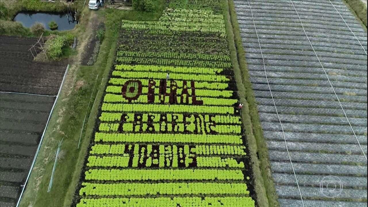Agricultor faz homenagem aos 40 anos do Globo Rural em uma produção de alfaces de SP