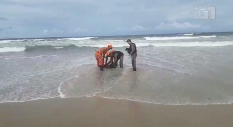Capivara é resgatada no mar da Praia do Futuro, em Fortaleza