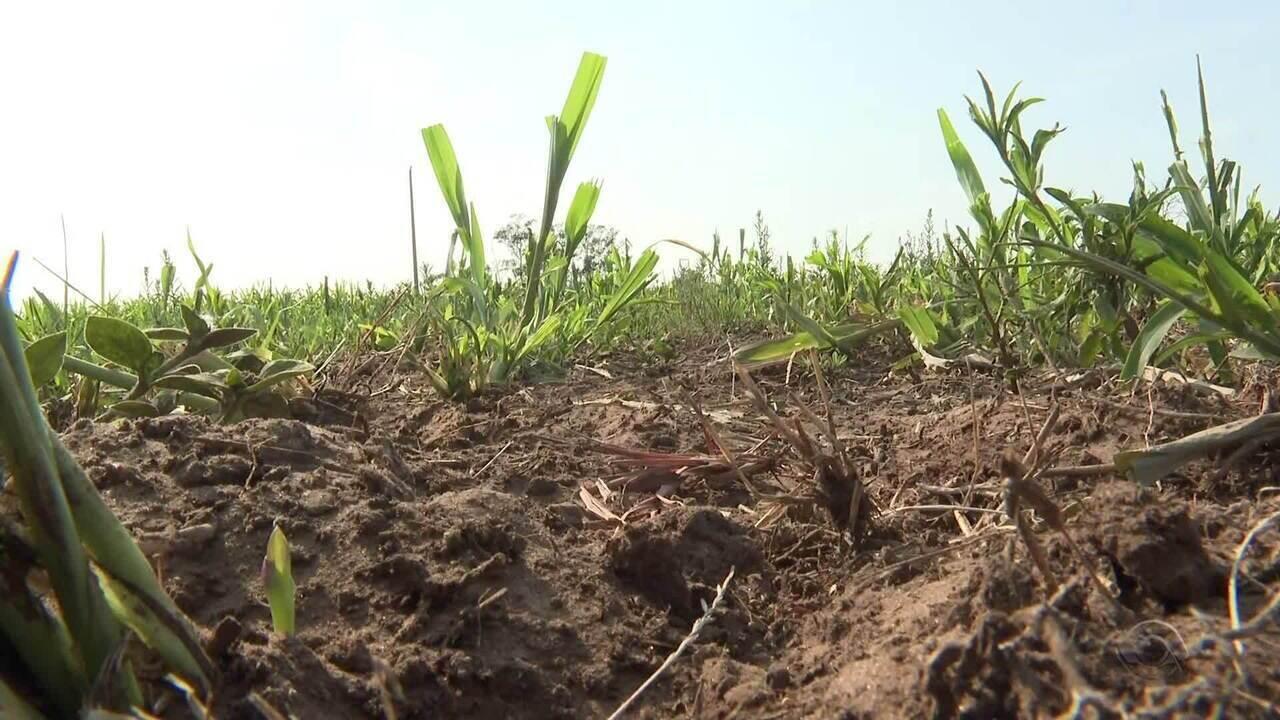 Agricultores do RS pedem seguro agrícola para reduzir prejuízos da estiagem