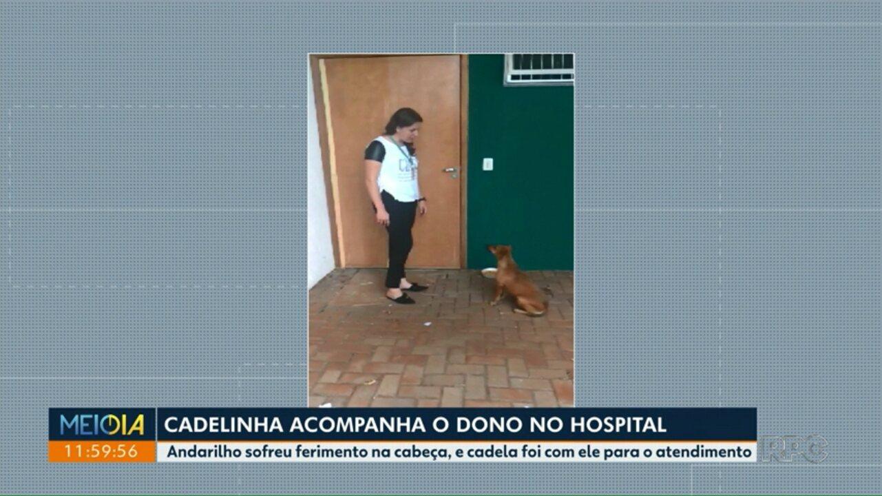 Cadelinha acompanha o dono no hospital