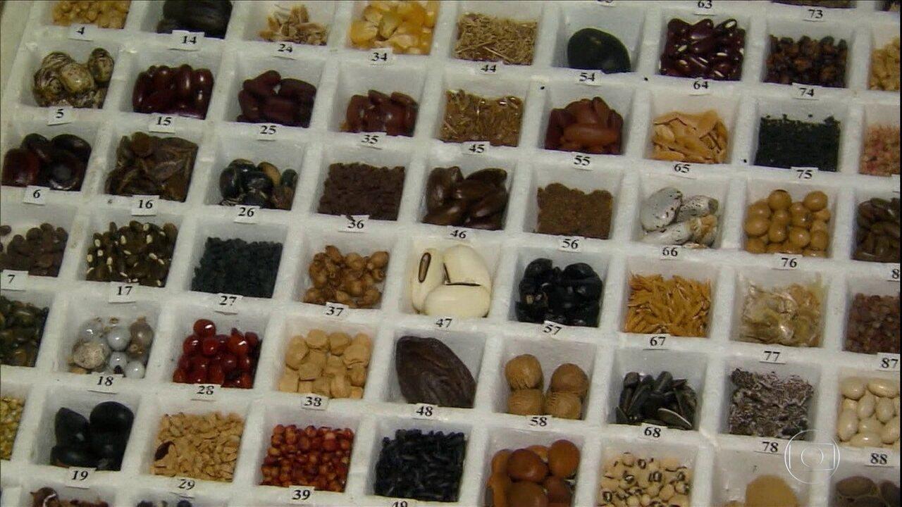 Embrapa envia milhares de sementes para 'bunker'localizado na Noruega