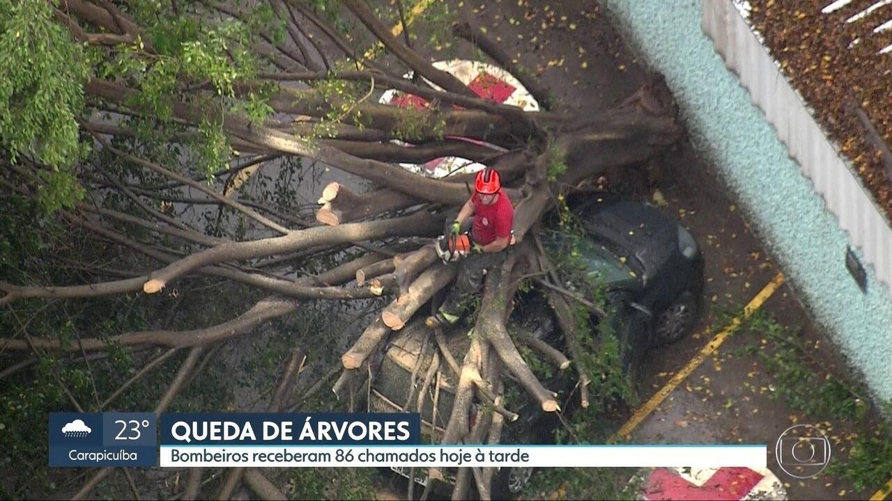 Chuva forte provoca queda de árvores na capital
