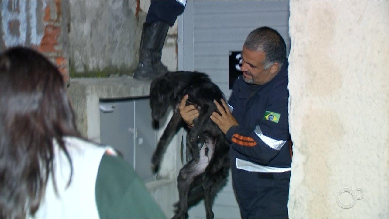 Cães em situação precária são resgatados pela Polícia Ambiental em Sorocaba